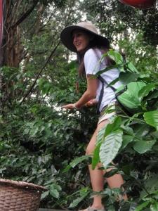 Volunteer Eco-Agriculture Costa Rica