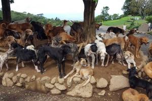 animal-care-volunteer-Costa-Rica